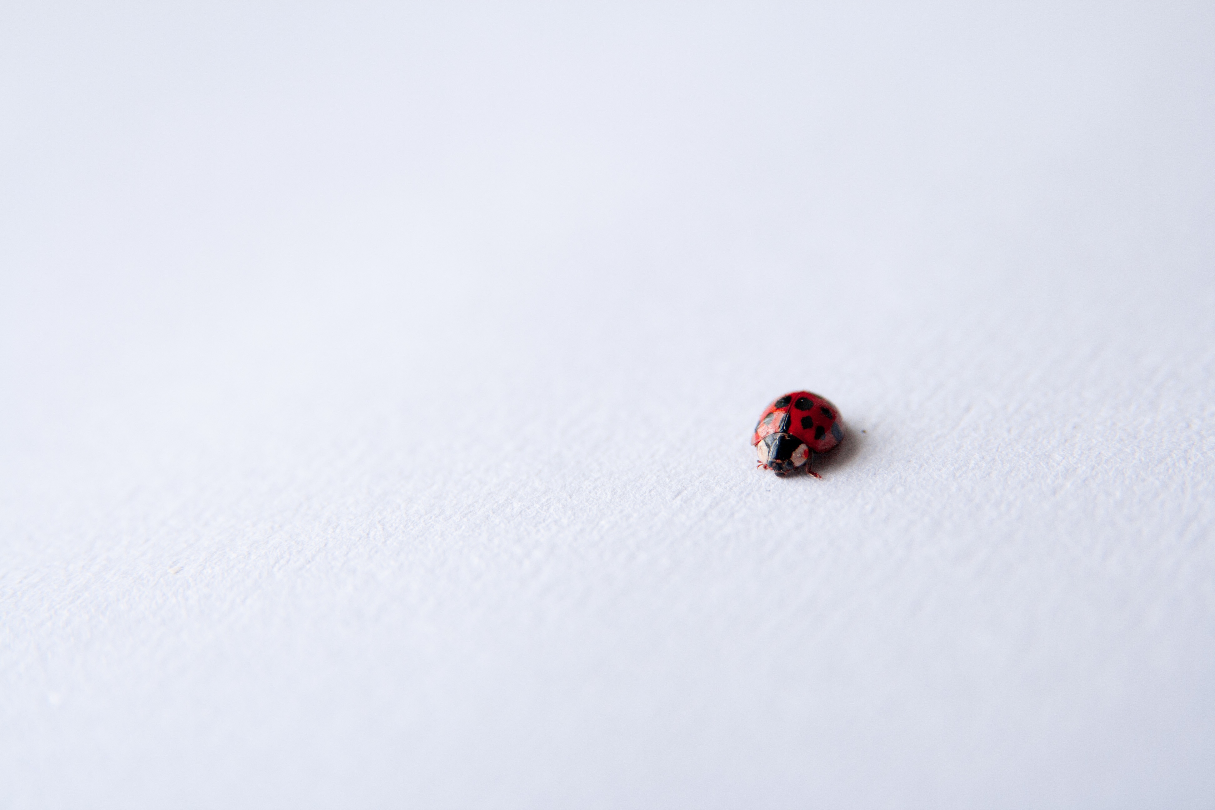 The Bug Sheet: An Editing Process Your Writing Will Thank You For - For Writers